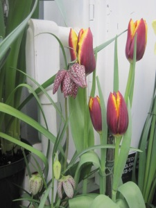 Smith College Bulb Show 002