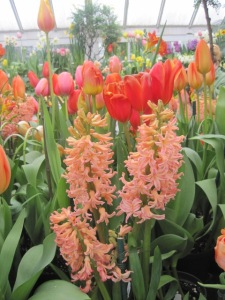Smith College Bulb Show 005