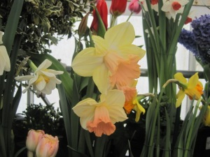 Smith College Bulb Show 007